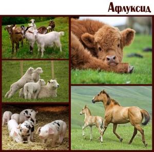 Афлуксид. Антидіарейний засіб для тварин