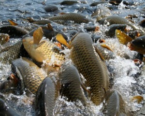Вітамінний комплекс для риби 0, 04%